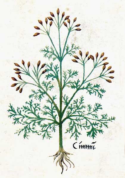 Enluminures: Les aliments au Moyen Âge 0-10