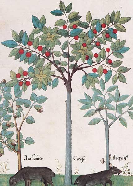 Enluminures: Les aliments au Moyen Âge 0-15
