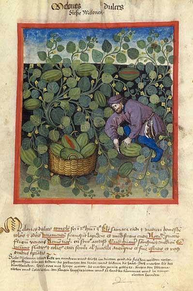 Enluminures: Les aliments au Moyen Âge 0-16