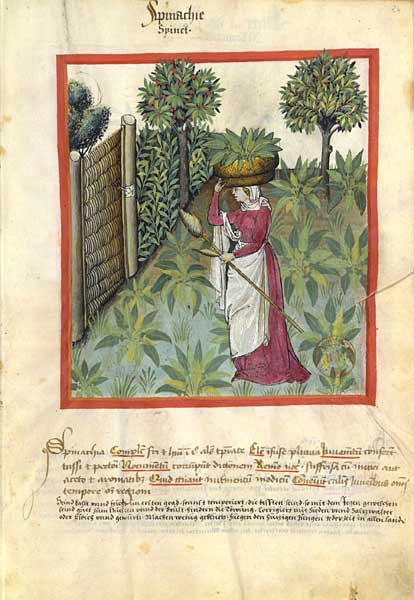 Enluminures: Les aliments au Moyen Âge 0-17