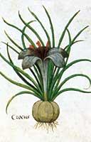 Enluminures: Les aliments au Moyen Âge 0-21