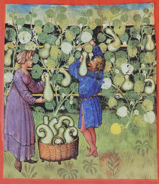 Enluminures: Les aliments au Moyen Âge 0-23
