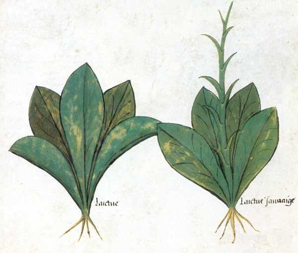 Enluminures: Les aliments au Moyen Âge 0-8