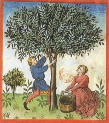 Enluminures: Les aliments au Moyen Âge 0-11