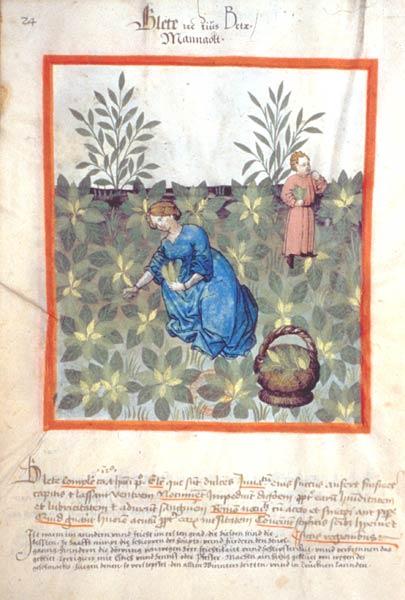 Enluminures: Les aliments au Moyen Âge 0-7